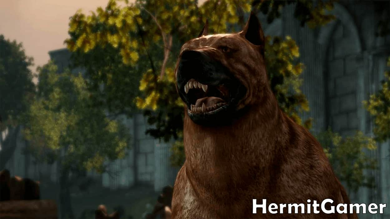 Dog Dragon Age Companion
